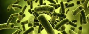 Бактериология
